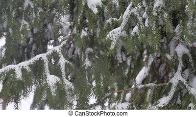 Fir trees in the snow in the forest. nature snow landscape outdoors