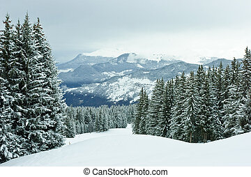Fir trees on winter mountain