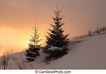 fir trees silhouette with orange sunset sky winter landscape