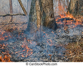 Fire 11 - A close-up of forest ground fire. Earli spring. ...