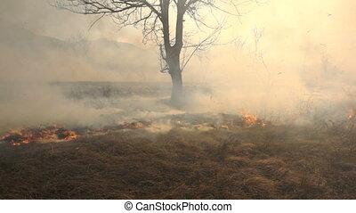Fire and Smoke, dry grass is burning slow motion