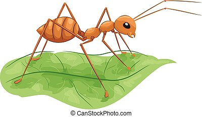 Fire Ant Standing on Leaf - Animal Illustration Featuring a...