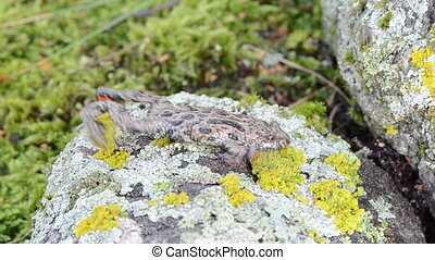 fire bellied toad bombina - european fire-bellied fire...