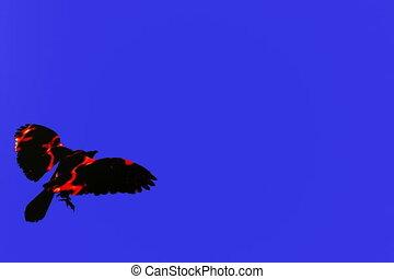 Fire Bird Six - Fire bird isolated over blue screen