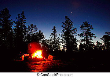 Fire burning at night in a forest