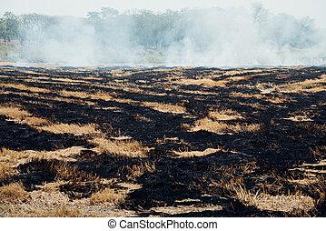 Fire burning dry grass it danger for environment