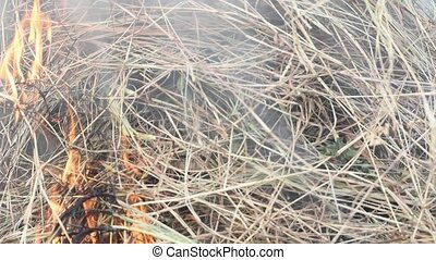 Fire burning dry grass it danger for environment - Fire and...