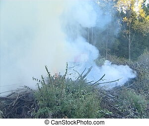 Fire fighting in the forest.