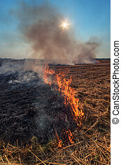 fire - Fire on wheat field close up