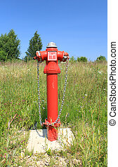 Fire hydrant in overgrown grass