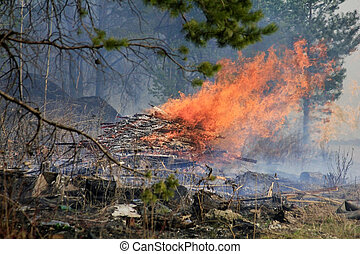 Fire in a forest - The image of a fire in a forest