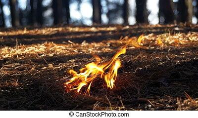 Fire in a Pine Forest - Fire in a pine forest. Pine needles,...