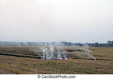 fire in a rice crop