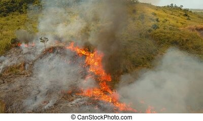 fire in a tropical bush - aerial footage forest fire on the...