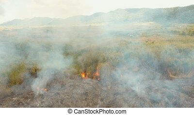 fire in a tropical bush - forest fire on slopes hills and...