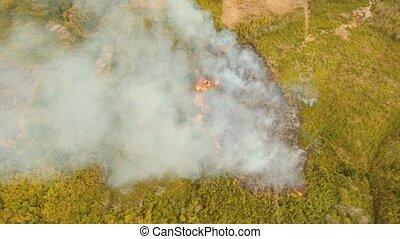 fire in a tropical bush