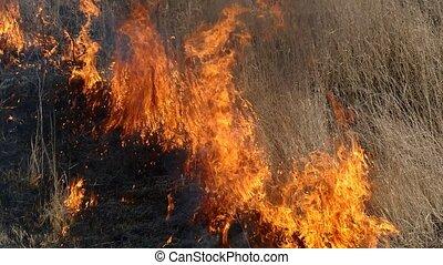 Fire in field