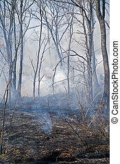 Fire in Forest 12 - A fire in leafy forest. Early spring.