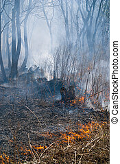 Fire in Forest 9 - A fire in leafy forest. Spring. Russian ...