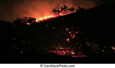 fire in forest at night