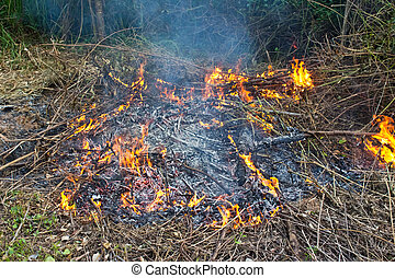 Fire in grass, nature disaster