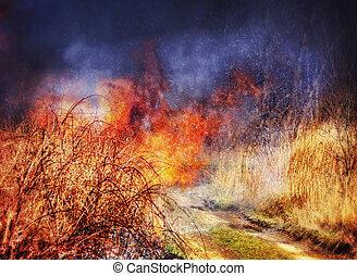 Fire in grass