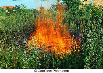Fire in green grass