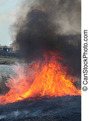 Fire in marsh, natural disaster - Natural disaster, fire...