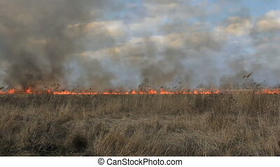Fire in the field