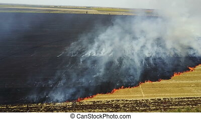 Fire in the field with stubble