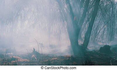Fire in the Forest. Burning Dry Grass, Trees and Reeds. Air pollution caused by wildfires. Natural disaster. Flames and smoke clouds at epicenter of fire. Charred tree trunks. Wild fire. Slow Motion.