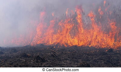 Fire in the Forest. Flame from Burning Dry Grass, Trees and ...