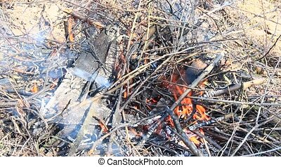 Body of flame inflaming in forest. Natural disaster