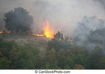 fire in the forest of wildfire photographed from a ...