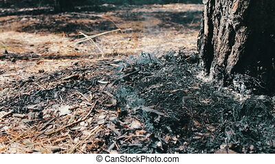Fire in the forest. Smoking fire under a pine tree. The problem of fires in the forest