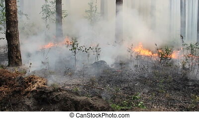 Fire in the forest, spreading fire and smoke