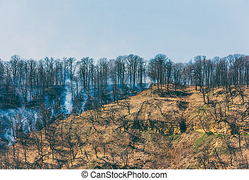 fire in the spring forest, the concept of natural disaster environmental disaster