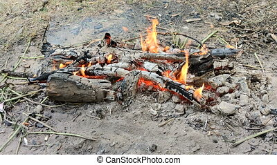 Fire in the wood. outdoor landscape