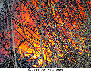 Fire in the Wood