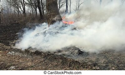 Fire in the woods with a strong smoke