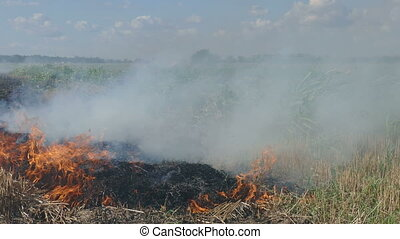Fire in wheat field