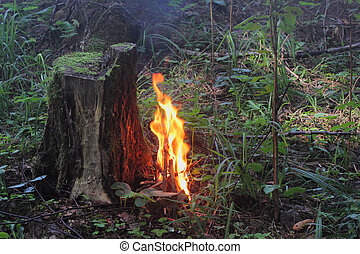 Fire in wood. Fire safety.