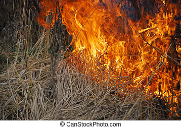 Fire is burning dry grass and bushes.