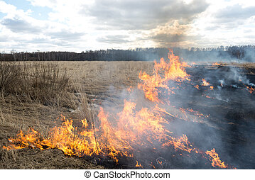 Fire. old grass burning in a field near the forest