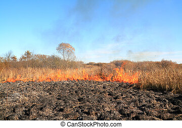 fire on autumn field