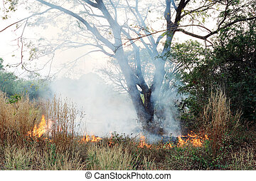 Fire and smoke on dry grass and trees