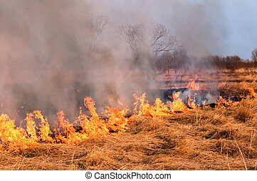 Fire on the nature
