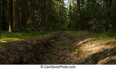 Fire pit in the forest 19. - Fire pit in the forest 19