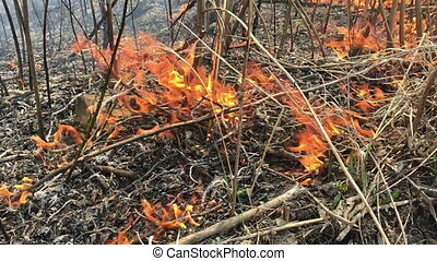 Fire rages in long grass, foreground slow motion