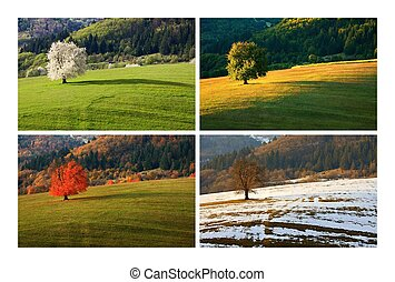 fire, sæson, kirsebær træ